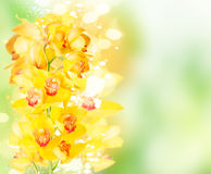 Flores amarelas da orquídea imagens de stock