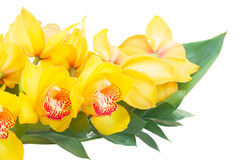 Flores amarelas da orquídea fotos de stock