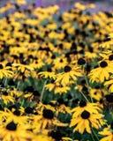 Flores amarelas da primavera fotografia de stock