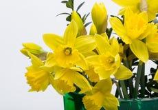 Flores amarelas de Jonquil Imagens de Stock Royalty Free