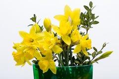 Flores amarelas de Jonquil Foto de Stock
