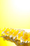 Flores amarelas de Leelawadee da série Fotografia de Stock