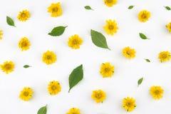Flores amarelas de Wedelia com folhas verdes Fotografia de Stock Royalty Free
