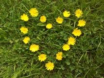 Flores amarelas do coração arranjadas imagens de stock royalty free