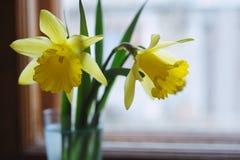 Flores amarelas do daffodil no vaso foto de stock royalty free