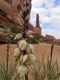 Flores amarelas do deserto foto de stock royalty free