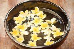 Flores amarelas do frangipani imagem de stock royalty free