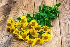 Flores amarelas do jardim do helenium fotos de stock
