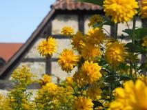 Flores amarelas do verão com casa metade-suportada Foto de Stock