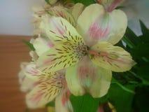 Flores amarelas e cor-de-rosa Fotografia de Stock