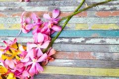 Flores amarelas e cor-de-rosa na madeira colorida Foto de Stock