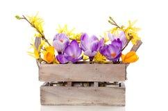 Flores amarelas e roxas do açafrão Foto de Stock