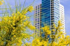 Flores amarelas e uma vista acima alta do arranha-céus para baixo Foto de Stock Royalty Free