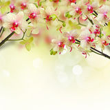 Flores amarelas e vermelhas da orquídea imagens de stock royalty free