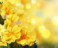 Flores amarelas em um fundo da natureza imagem de stock royalty free
