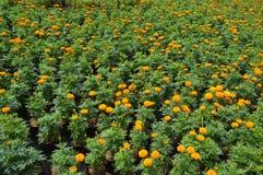Flores amarelas em um jardim Fotos de Stock