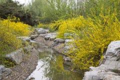 Flores amarelas em um jardim, porcelana Imagens de Stock Royalty Free