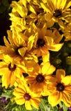 Flores amarelas em um por do sol ensolarado imagem de stock