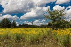 Flores amarelas em um prado verde Imagem de Stock Royalty Free