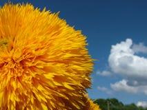 Flores amarelas felizes Imagem de Stock Royalty Free