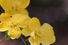 Flores amarelas impressionantes que sorriem na manhã foto de stock royalty free