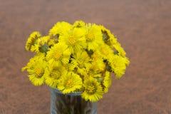 Flores amarelas mãe e madrasta da mola na terra no parque fotografia de stock royalty free