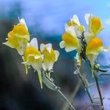Flores amarelas macro fotografia de stock