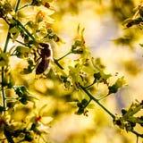 Flores amarelas macro bonitas foto de stock
