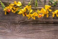 Flores amarelas na madeira foto de stock