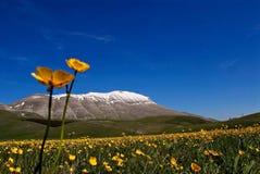 Flores amarelas na pradaria fotos de stock royalty free