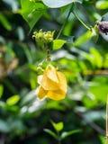Flores amarelas na selva Fotos de Stock Royalty Free