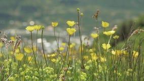 Flores amarelas nas montanhas, Geórgia filme