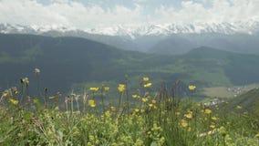 Flores amarelas nas montanhas, Geórgia video estoque