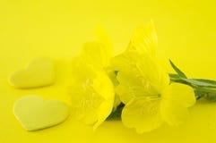 Flores amarelas no fundo amarelo Fotos de Stock Royalty Free
