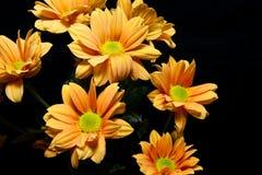 Flores amarelas no fundo preto imagens de stock