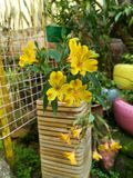 Flores amarelas no jardim Foto de Stock
