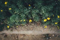 Flores amarelas no jardim Imagens de Stock Royalty Free