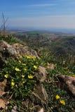 Flores amarelas pequenas Foto de Stock
