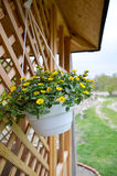 Flores amarelas pequenas no fundo de madeira Imagens de Stock Royalty Free