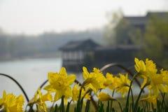 Flores amarelas, um alojamento isolado na distância imagem de stock