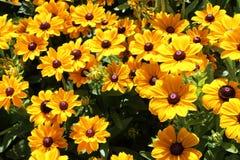 Flores amarelas fotos de stock royalty free