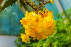 Flores amarelo-alaranjadas magníficas fotos de stock