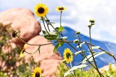 Flores amarillas Fotos de archivo