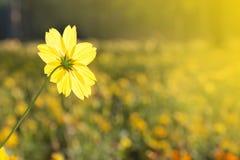 Flores amarillas. Imagenes de archivo