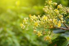 Flores amarillas Fotografía de archivo