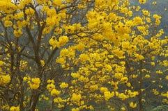 Flores amarillas Foto de archivo