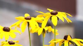 Flores amarillas almacen de metraje de vídeo