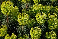 Flores amarillas imágenes de archivo libres de regalías
