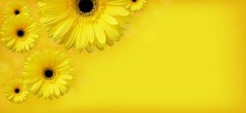 Flores amarillas stock de ilustración