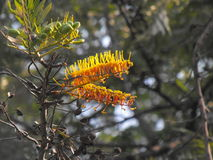 Flores Amarillas imagem de stock royalty free
